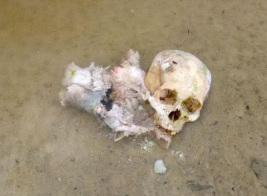 Crânio encontrado no Tarumã é de Rosiane Costa, decapitada pelo cunhado