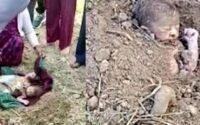 Bebê recém nascido é enterrado vivo em área de mata